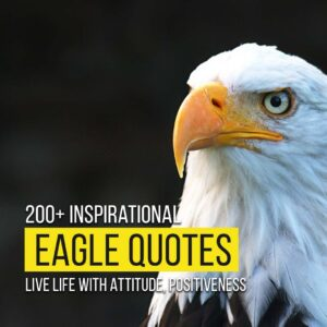 Read more about the article 200+ Inspirational Eagle Quotes | Live Life With Attitude, Positive